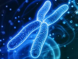 Neue Forschungsgruppe untersucht die Instabilität von Chromosomen und deren Folgen